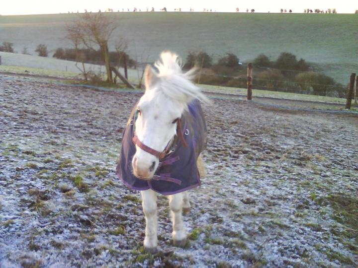 snowy in the field