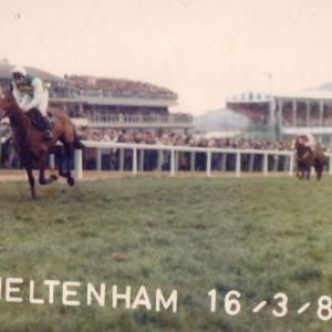 cheltenham-16-03-1988-pragada