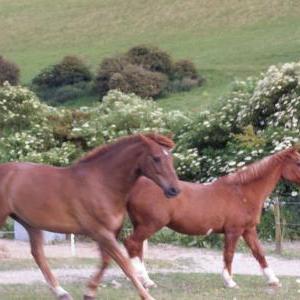 chestnuts-riding-school-12-06-2004-062