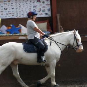chestnuts-riding-school-21-08-2007-33