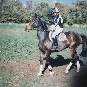 chestnuts-riding-school-Image17