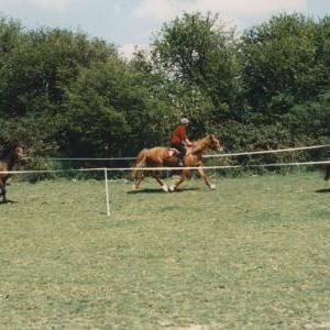 chestnuts-riding-school-Image63