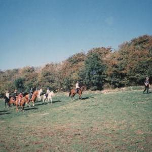 chestnuts-riding-school-Image72