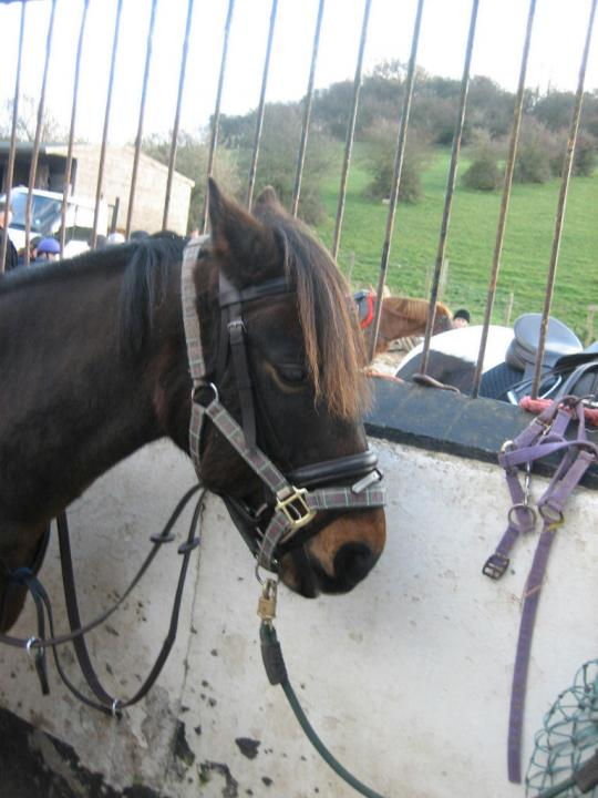 chestnuts-riding-school-bud-22-11-2008-pic12