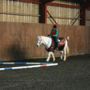 chestnuts-riding-school-christmas-gymkana-30-12-2008-pic13