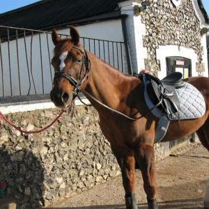 chestnuts-riding-school-march-09-03-2007-3