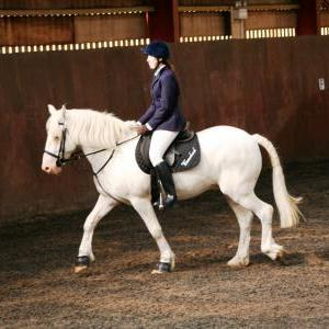 chestnuts-riding-school-sussex-brighton-dressage-2006-05-10-2008-02