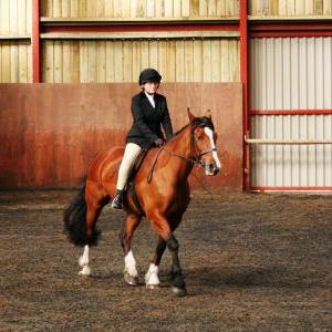 chestnuts-riding-school-sussex-brighton-dressage-2006-05-10-2008-09