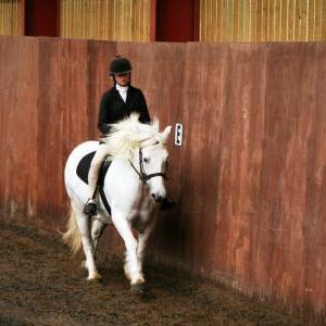chestnuts-riding-school-sussex-brighton-dressage-2006-05-10-2008-34