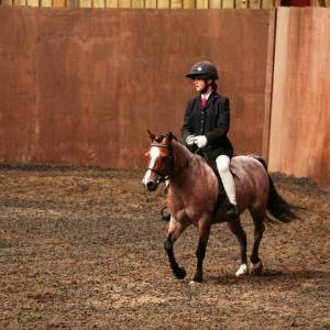 chestnuts-riding-school-sussex-brighton-dressage-2006-05-10-2008-60