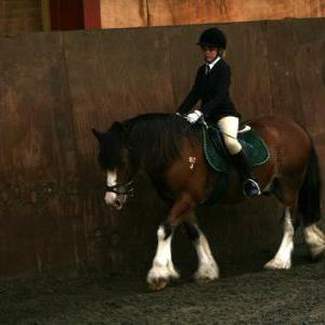 chestnuts-riding-school-sussex-brighton-dressage-2006-05-10-2008-69