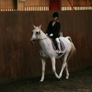 chestnuts-riding-school-sussex-brighton-dressage-2006-05-10-2008-79