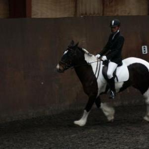 Horse Riding Sussex Brighton - Chestnuts Riding School ... - photo#50